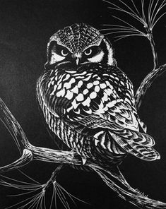 Small Owl 1976
