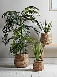 NEW Three Seagrass Basket Planters - Indoor Plant Pots & Planters - Decorative Home Accessories - Luxury Homeware Indoor Flower Pots, Indoor Plant Pots, Indoor Planters, Potted Plants, Plant Basket, Basket Planters, Baskets For Plants, Baskets For Storage, House Plants Decor