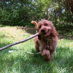 """Tra la la la la, I have a stick and it is mine!"" 