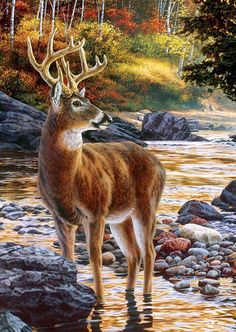 Shallow Crossing by Hautman Brothers ~ stag deer in autumn stream
