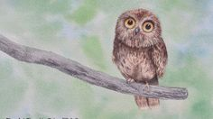 How to Paint a Pygmy Owl With Watercolor