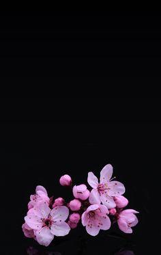 Sparkles Background, Flower Background Wallpaper, Flower Backgrounds, Wallpaper Backgrounds, Little Flowers, My Flower, Flower Art, Amazing Flowers, Love Flowers
