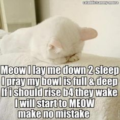 Haha! My cats dont meow though. They pounce and dig me out from under the blankets. :)