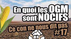 En quoi les OGM sont NOCIFS - Ce con ne nous dit pas #17