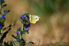 Butterfly - Motýl