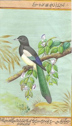 Magpie Bird Art Handmade Indian Nature Wild Life Miniature Ornithology Painting