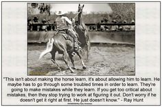 Horse Gear, Horse Tips, Horse Training, Training Tips, Inspirational Horse Quotes, Show Jumping Horses, Horse Riding Quotes, Horse Stables, Horse Barns