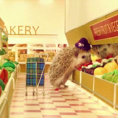 12 Uh-dorable Hedgehog GIFs - FabFitFun