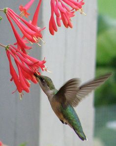 Humming birds are nice to look at if you see them first.  Sometimes they buzz by me when I walk and I think it is a giant bee.