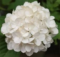Resultado de imagen para flores blancas