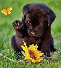 Super Cute Puppies, Baby Animals Super Cute, Cute Baby Dogs, Cute Little Puppies, Cute Dogs And Puppies, Cute Little Animals, Cute Funny Animals, Doggies, Black Lab Puppies