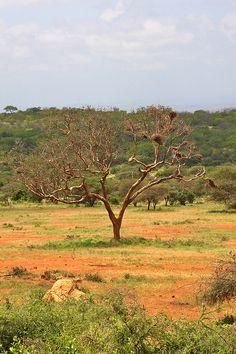 Safari Tsavo Ovest - Watamu, Kenya
