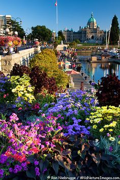 The Legislative or Parliament Buildings are located on the Inner Harbour, Victoria, Vancouver Island, British Columbia, Canada