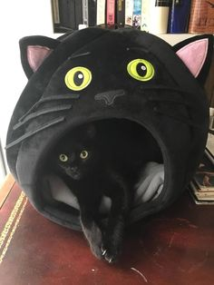 Black Cat in a Black Cat Bed 😺 Cool Cats, Funny Cute Cats, I Love Cats, Fun Funny, Crazy Cat Lady, Crazy Cats, Here Kitty Kitty, Cat Furniture, Beautiful Cats