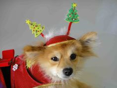 Christmas hat for dog or cat. via Etsy.