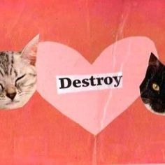 Find images and videos about pink, cat and kitty on We Heart It - the app to get lost in what you love. Valentine Love, Night In The Wood, Riot Grrrl, Wow Art, The Villain, Vaporwave, Wall Collage, Art Inspo, Kitty
