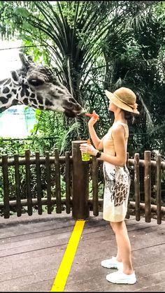 #giraffe #nature #singapore #safari #travel #traveloutfit
