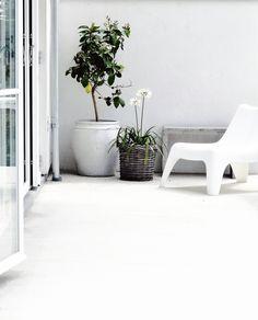 indoor plants | HarperandHarley