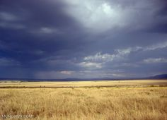 Savannas and grasslands are more biodiverse than you might think — and…
