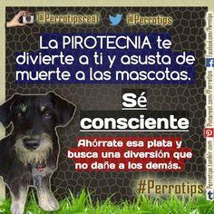 No generes pánico en las mascotas y estrés en la gente con la pirotecnia.  Búscate otra diversión que no moleste a los demás #perrotips