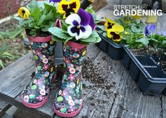 Kick the winter blues by planting colorful pansies in a cute boot. Click through for step-by-step instructions!