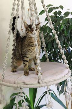 Cat Room, Cat Furniture, Diy Stuffed Animals, Pet Beds, Cat Life, Crazy Cats, Cool Cats, Pet Supplies, Dog Cat