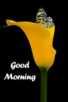 Latest Good morning images for love Good Morning Monday Images, Good Morning Photos Download, Latest Good Morning Images, Good Morning Flowers, Good Morning Picture, Good Morning Good Night, Good Morning Beautiful Pictures, Morning Pictures, Good Night Qoutes