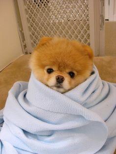 Blanket Boo Dog