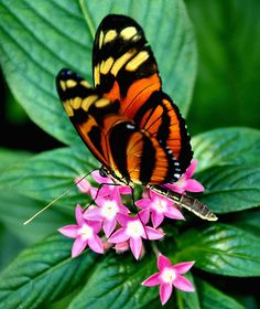 Butterfly - Gorgeous Colors !