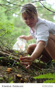 Heimische Pilze sammeln und identifizieren mit Hilfe vom Pilzlexikon #pilze #mushrooms