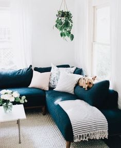 White Walls And Deep Turquoise Couch Turquoise Couch, Teal Couch, Home  Living Room,