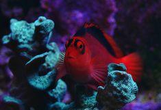 Pretty Fish, Reef Aquarium, Corals, Badge, Watch, Animals, Clock, Animales, Animaux