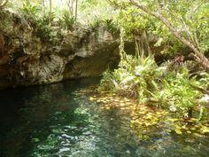 El Gran Cenote, près de Tulum, Etat de Quintana Roo Blog d'un étudiant expat, plein d'infos