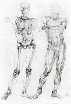 Human Figure Drawing Reference Academic Drawing - skeleton and muscle flesh cover - side by side - Drawing Reference, Sketches, Drawings, Human Anatomy Drawing, Figure Drawing, Drawing Poses, Anatomy Sketches, Human Figure Drawing, Art