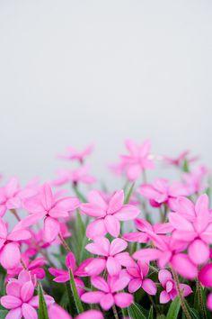 Angie✜ ༻♡༻ ღ☀☀ღ‿ ❀♥♥ 。\|/ 。☆ ♥♥ »✿❤❤✿« ☆ ☆ ◦ ● ◦ ჱ ܓ ჱ ᴀ ρᴇᴀcᴇғυʟ ρᴀʀᴀᴅısᴇ ჱ ܓ ჱ ✿⊱╮ ♡ ❊ ** Buona giornata ** ❊ ~ ❤✿❤ ♫ ♥ X ღɱɧღ ❤ ~ Wed 15th April 2015