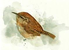 Carolina Wren, watercolor. From studiotuesday on Etsy. $18.00