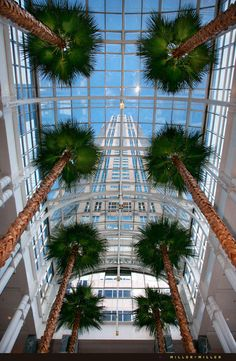 Must see the atrium, wintergarden, fountain at 311 S Wacker (Pazzo's restaurant). Even in winter, it's tropical in Chicago! Formerly Yvette's Wintergarden & Piano bar. Willis Tower (formerly Sears Tower) landmark right next door.