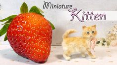 Hey guys! For today's miniature and polymer clay tutorial we're making a cute, fluffy kitten :) I want to make the cat accessory video for next week, so I ne...