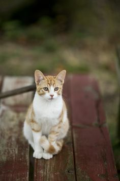   Max_Sitting cat