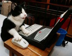Cats rule the Internet found!  #cats #internetcats #catsofpinterest #computercat www.itheadquarters.com