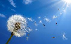 Using Probiotics to Prevent Allergies