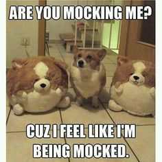 ARE YOU MOCKING ME?! Get your round up of funny and cute (All mixed together) doggo memes! #cutedogs #lol #adorable #funny #humor #animals #funnydogmemes #dogmemes #memes Cat And Dog Memes, Cute Dog Memes, Funny Animal Quotes, Funny Cats And Dogs, Animal Jokes, Funny Animal Pictures, Funny Animals, Cute Animals, Funny Memes