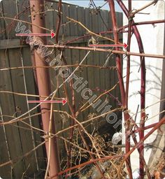 Taiere mur-tulpinile ce se suprima -taie Permaculture, Ladder Decor, Gardening, Agriculture, Wall, Plant, Garten, Lawn And Garden, Horticulture