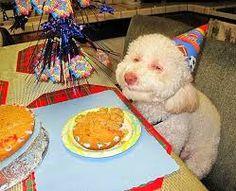 Resultado de imagem para cachorros engraçados sorrindo