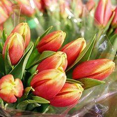 #tulpen #orange #Blumenstrauß #frühling Orange, Vegetables, Plants, Cut Flowers, Tulips, Creative, Veggie Food, Flora, Vegetable Recipes