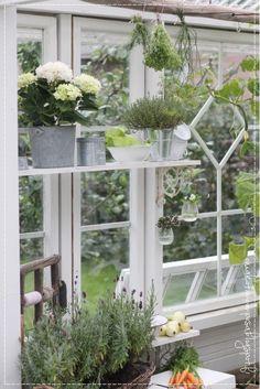 Hydroponic Plants, Hydroponics, Window Greenhouse, Greenhouse Ideas, Garden Compost, Potting Sheds, Backyard, Patio, Old Windows