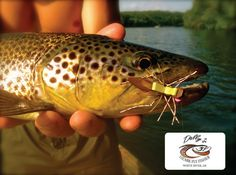 Dally's Fly Fishing Report _ 6-27-13 | The Ozark Fly Fisher Journal