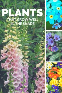 Plants That Grow Well in the Shade - Garden Decor -  Given how little sunshine that our gardens benefit from in the UK, it's a good idea to look for plants that grow well even when there's plenty of cloud cover. It's not only foliage that grows well; don't give up, there are some interesting plants that grow extremely well... #Flowers #Grow #Shade #UK