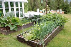 Grønnsaksbenk - www.ovredalenshjemmeside.com Plants, Compost, Nature, Plant, Planets