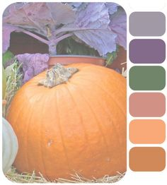 Lavender and grey with warm fall tones of peach and copper. How do you feel about that?